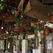 salas_curan_gallery_restoran_item_05