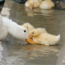 domace-patke